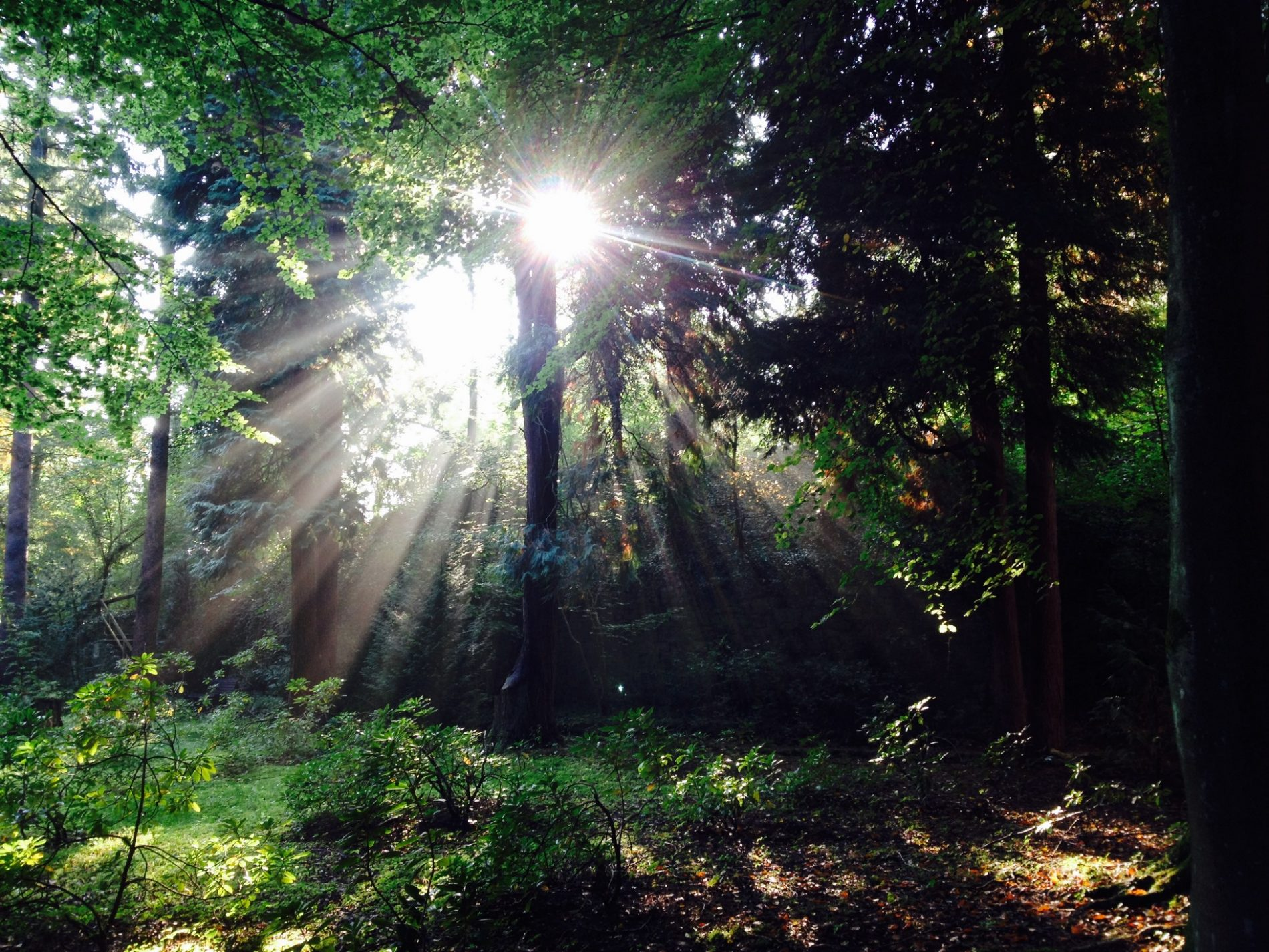 Forest Bathing as a healing bath for body and mind